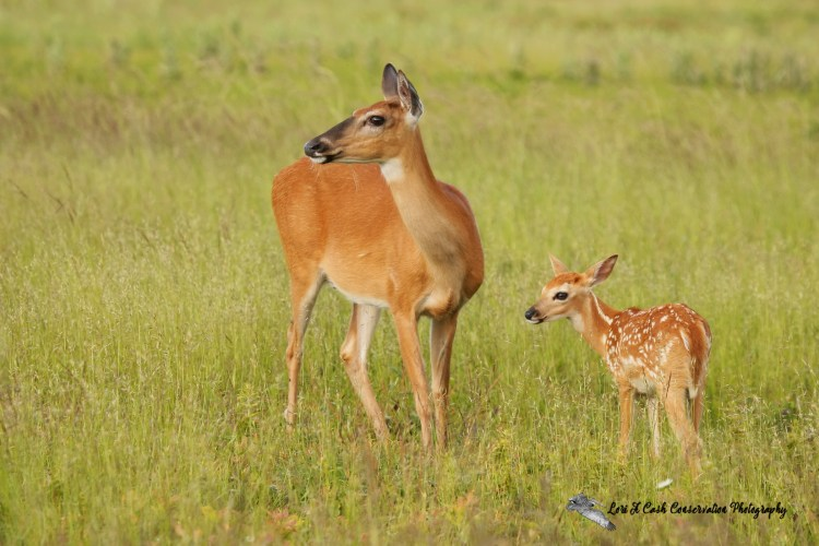 Wildlife Photo Gallery by Lori A Cash Conservation Photography.