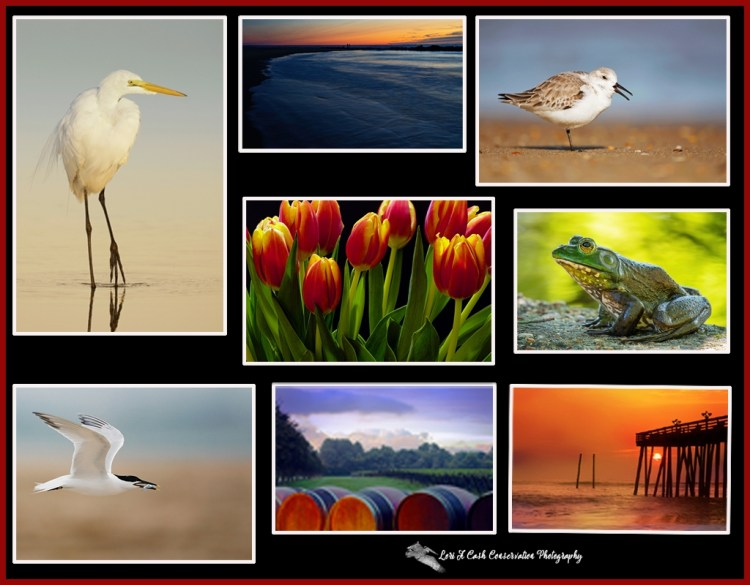 Creative Charts Chat Article Image Collage by Lori A Cash Conservation Photography