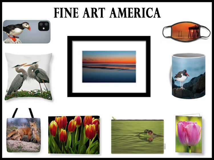Link to Lori A Cash's Fine Art America Portfolio to purchase her wildlife and nature photography.