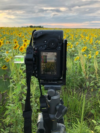 Lori's camera and tripod setup using a L-bracket for verticals and a level bubble to make sure image is straight while photographing sunflower field at sunset.