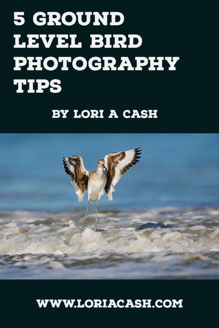 5 Tips for Ground Level Bird Photography by Lori A Cash