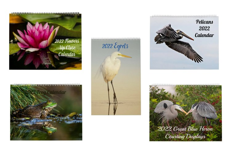 2022 Wall Calendars of Wildlife and Nature Photography on Zazzle by Lori A Cash Conservation Photography.