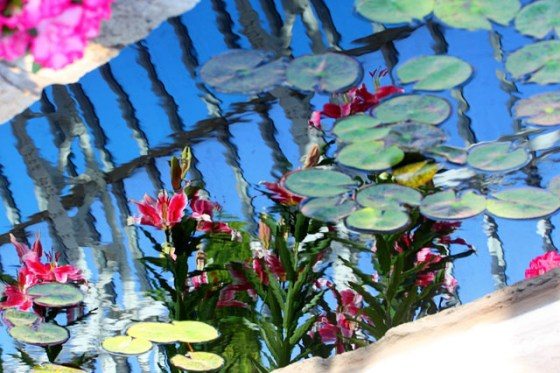 Como Park Conservatory, Reflections, color, flower, flower photography