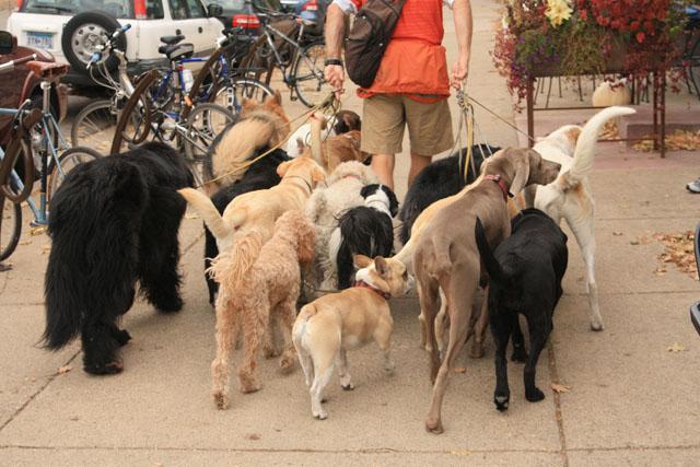The Dog Whisperer, The Dog Walker