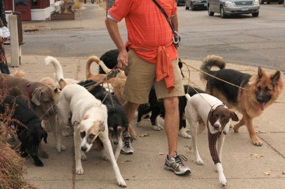 The Dog Whisperer, The Dog Walker