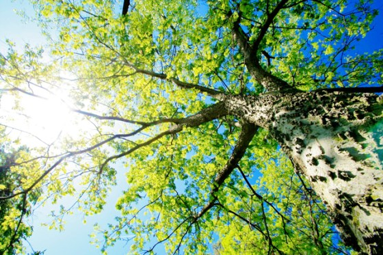 Tree Images, Arbor Day 2013