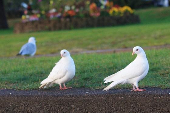 St. Croix River, Birds