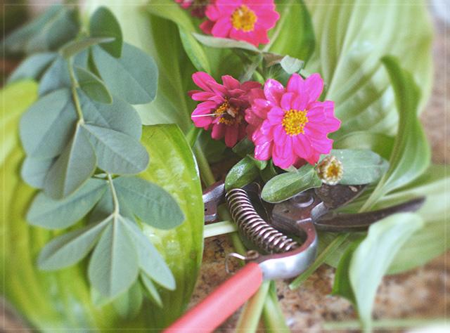 Gardening, Zinnias