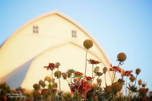 White Barn, Fall flowers