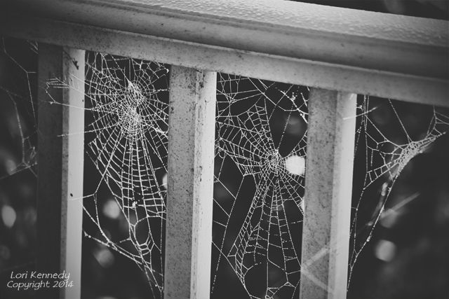 Spider Web,  Black and White photography