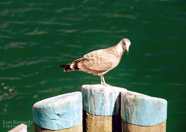 Bird on a Pier