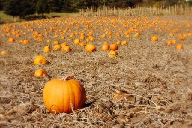 Pumpkins.LKennedy003