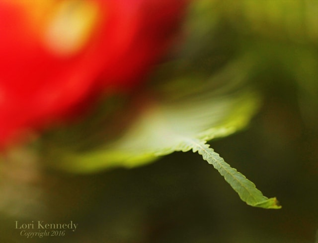 Macro, Flowers, Lori Kennedy