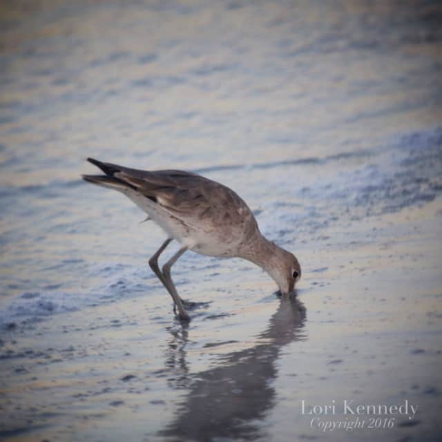 Florida, Birds, Lori Kennedy