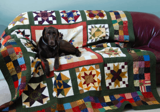 "Linda Warren's 14 year old chocolate lab ""Bailey"" will hop up on any bed or couch that has a quilt!"
