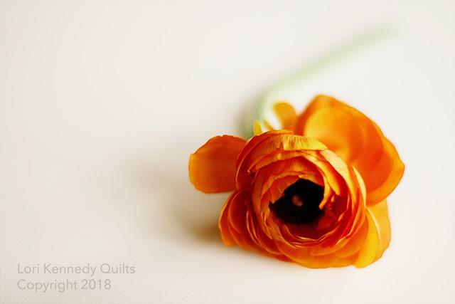 Ranunculus, Lori Kennedy