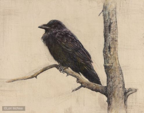 ©2012 Lori McNee Raven 16x20 Graphite on panel