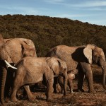 Conscious Travel: Elephant Awareness