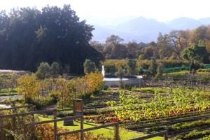 Boschendal Farm Tour
