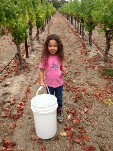 Winemaker-in-Waiting Elliana