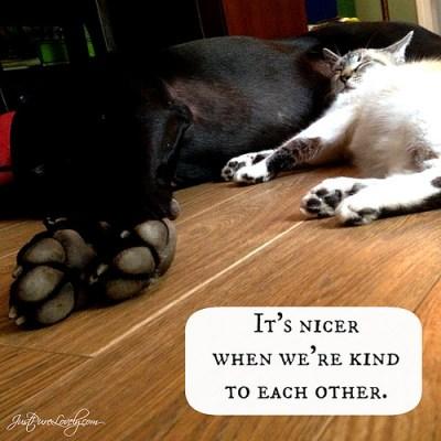 It's Nice When We're Kind