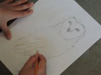 Illustration of owl for the habitat panels.