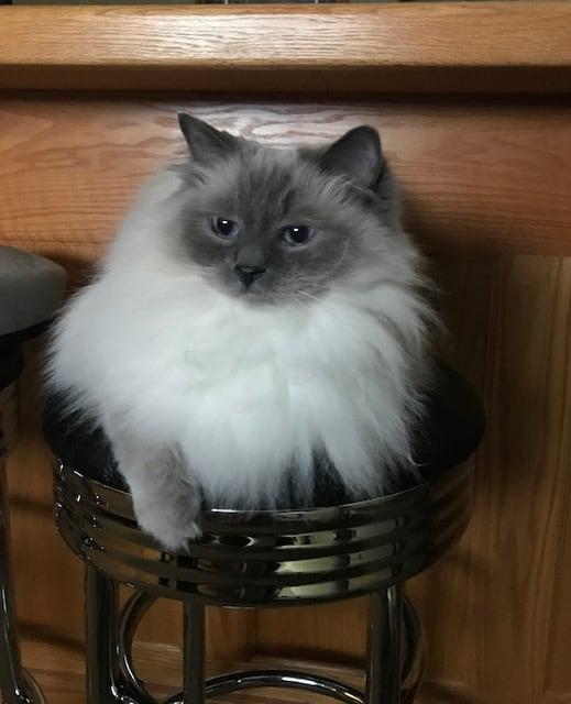 Bella on a stool