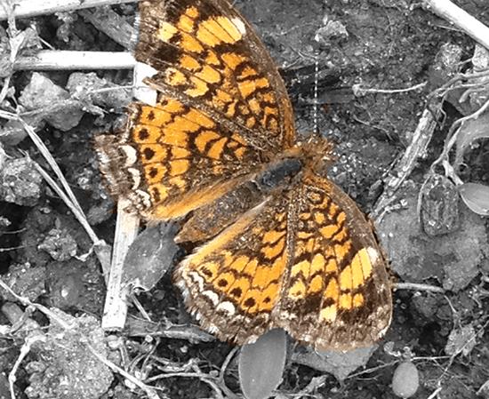 butterfly-mommy