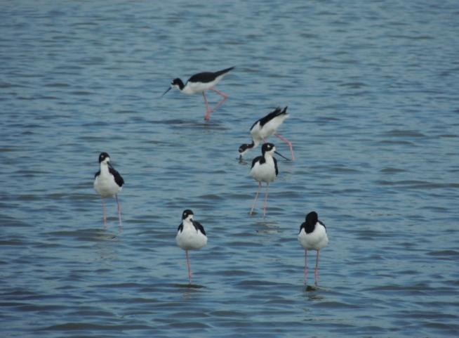 Birds walking on water