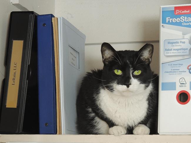 Truman-on-a-shelf
