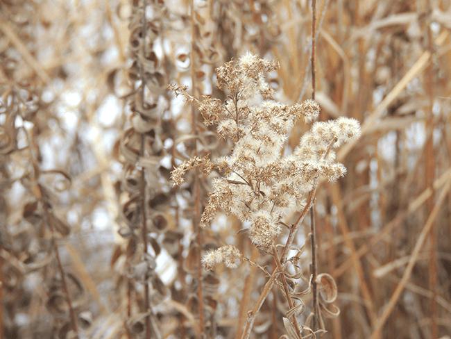 Winter Wild Flowers