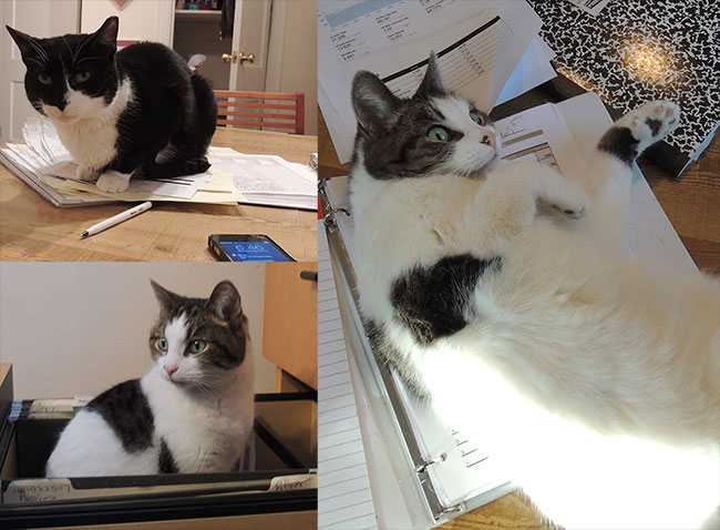 cats-in-the-office