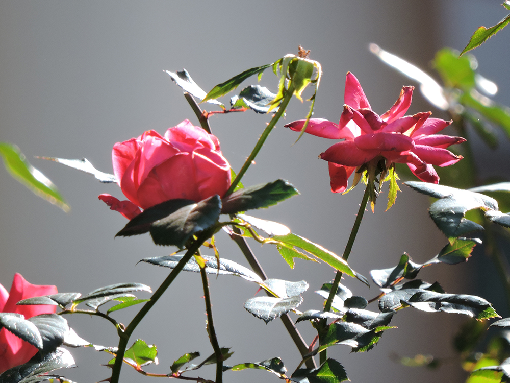 winter flowers in dallas