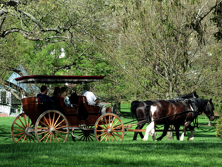 The Greenbrier Horses