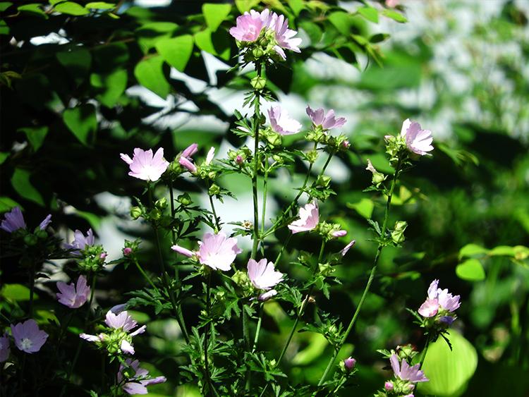 zionsvllle flower