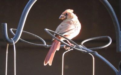 Birds of Eagle Creek Park