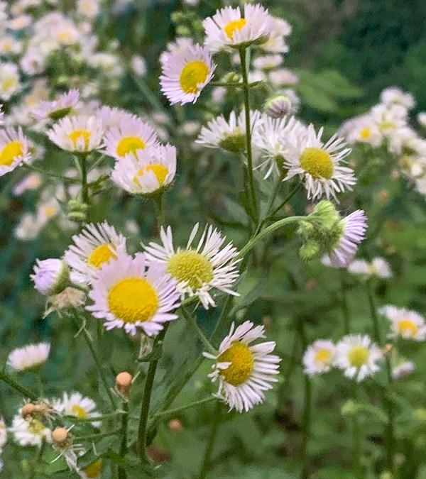 Little Flowers