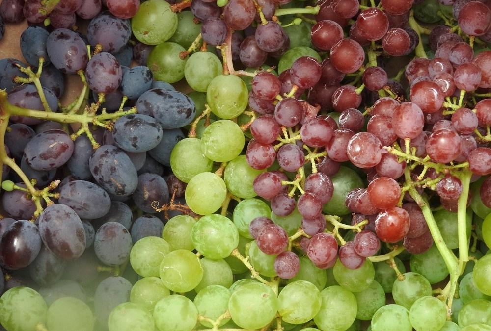 Grapes Glorious Grapes