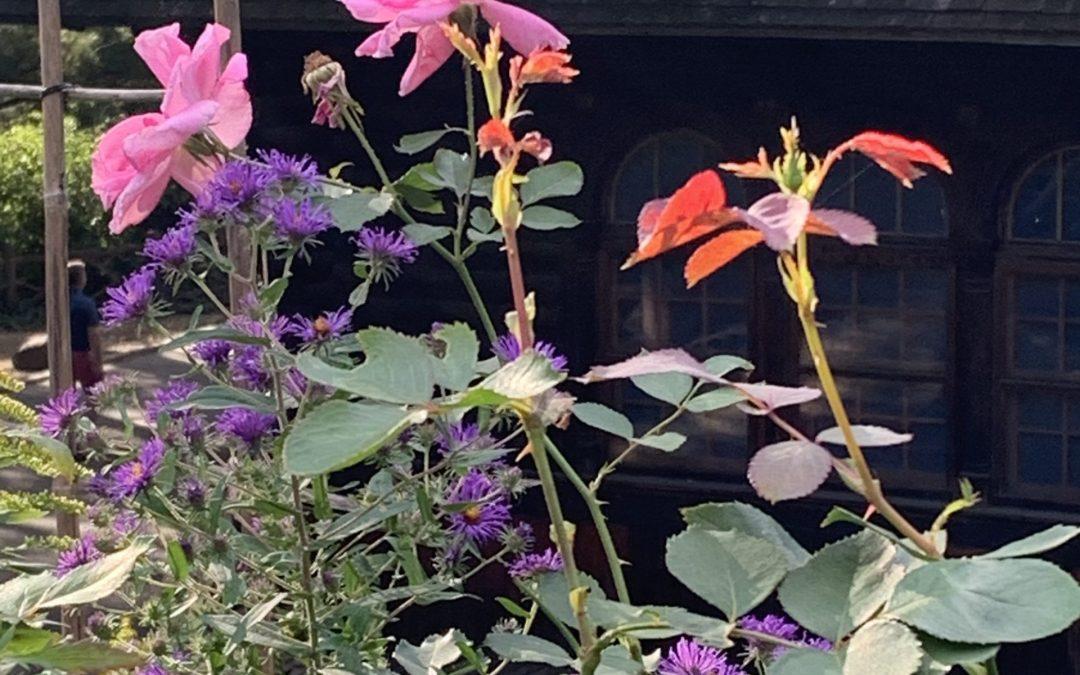 Shakespeare Has a Garden in NY