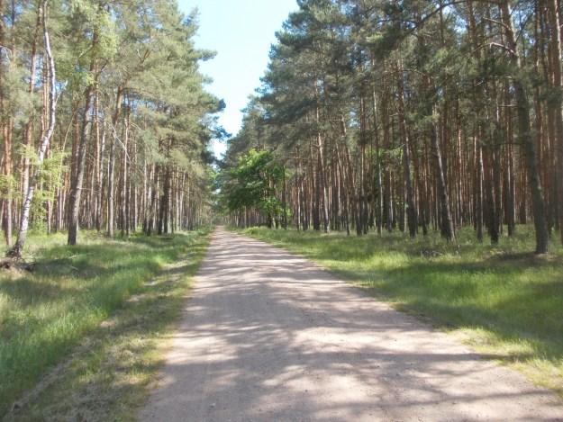 Durch den Wald…