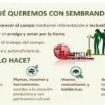 ARRANCA PROYECTO DE REFORESTACION SEMBRANDO VIDA