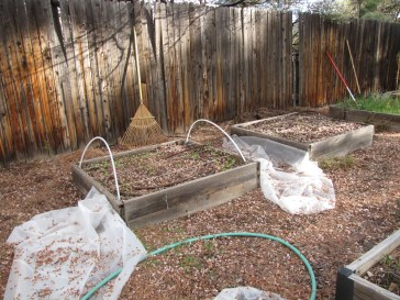 the dishelveled, uncovered beds fit in well with the yard's current look