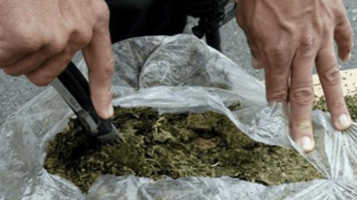 Con marihuana fueron capturados en Molagavita
