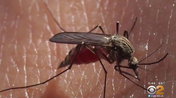 Mosquitoes Carrying Dangerous Viral Disease Found In Orange County