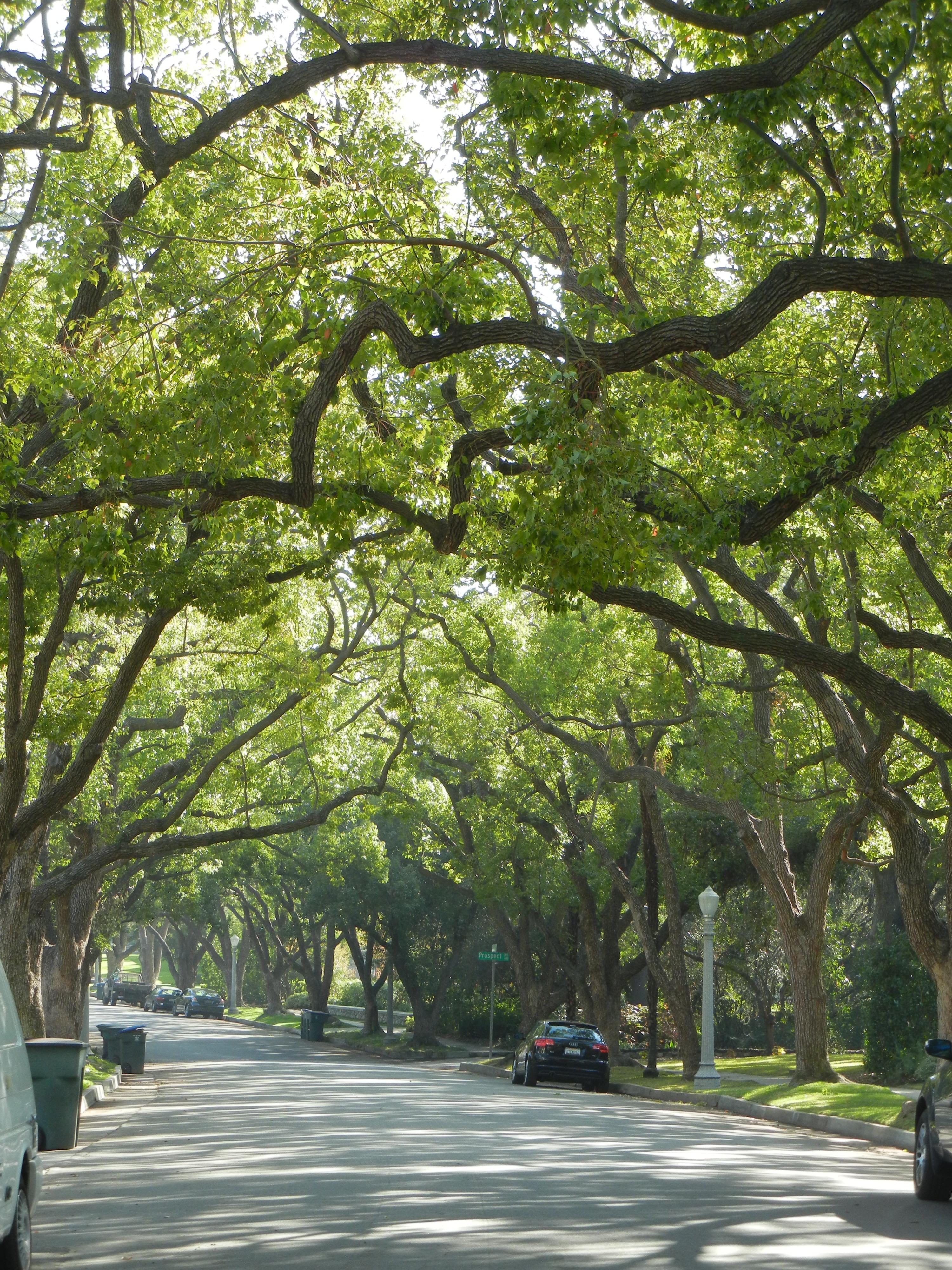 Trees Of Los Angeles Los Angeles Love Affair