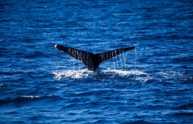 cabo-escape-whale-watching-2