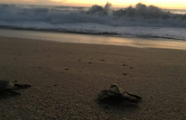 Luvis Tours Turtle Release