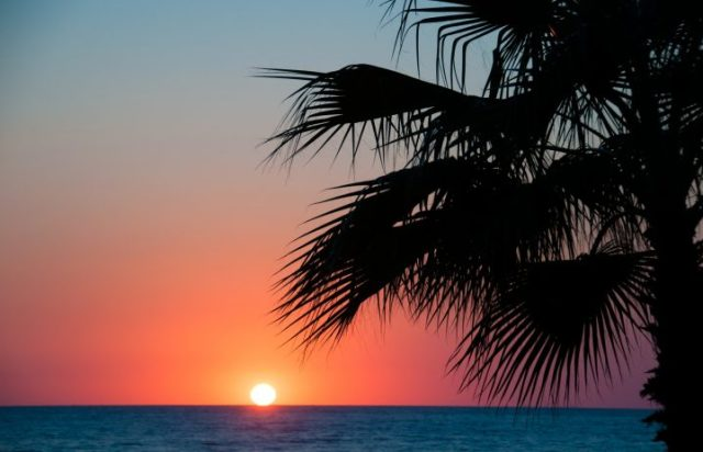 Sunset beach, evening sea, palm trees