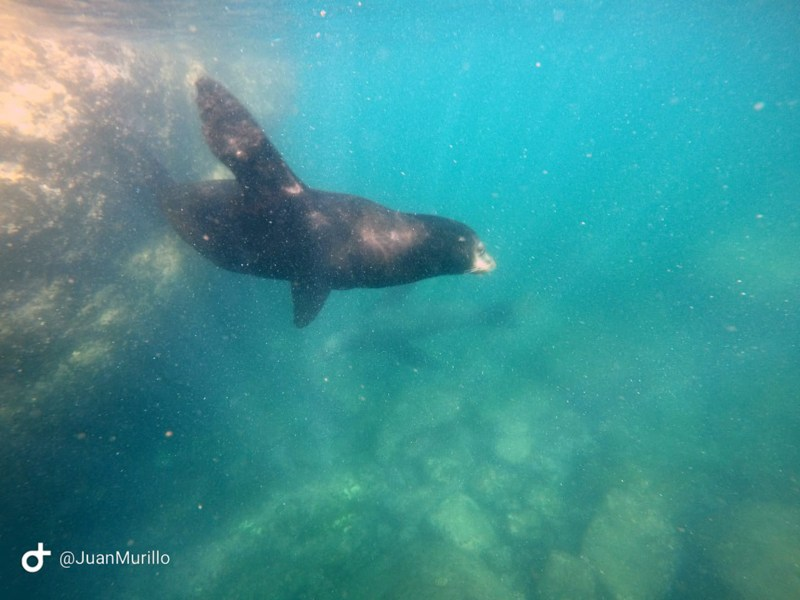 Cabo Pulmo Travel Snorkel-3