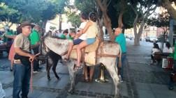 Romería de los Burros - San Benito Abad- La Laguna 2015 (10)